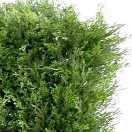 cypr s mini haie feuillage artificiel plantes et jardins. Black Bedroom Furniture Sets. Home Design Ideas