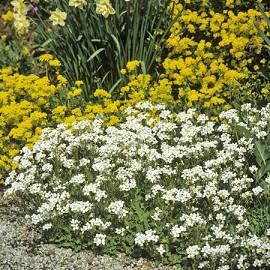 corbeille d 39 argent fleurs simples blanches plantes et jardins. Black Bedroom Furniture Sets. Home Design Ideas