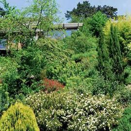 Un jardin en sol calcaire plantes et jardins for Destockage plantes jardin