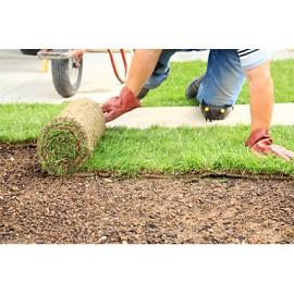 Gazon naturel en rouleau x 1m2 plantes et jardins for Jardin 1m2