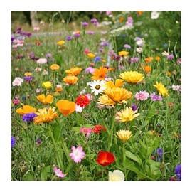 jach re fleurie courte plantes et jardins. Black Bedroom Furniture Sets. Home Design Ideas