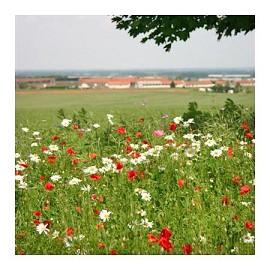 Jach re fleurie fleurs des pr s plantes et jardins - Fleur de jachere ...