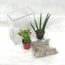 kit composition de plantes grasses en verrerie plantes. Black Bedroom Furniture Sets. Home Design Ideas