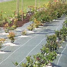 toile de paillage 1 25m x 25m verte plantes et jardins. Black Bedroom Furniture Sets. Home Design Ideas