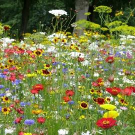Prairie fleurie les amis du jardin coccinelles 30m for Plante fleurie jardin
