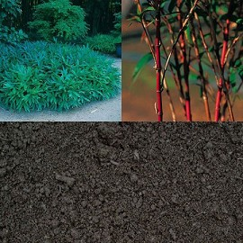 Terreau pour bambous 5l bioster plantes et jardins - Quel terreau pour bambou ...