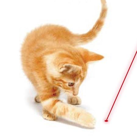 Un nouveau jouet pour amuser votre chat cet automne !