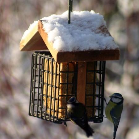 Nourrissez les oiseaux durant l'hiver
