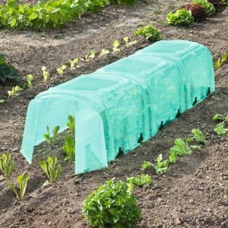 Dans un coin du jardin, mettez en place une pépinière
