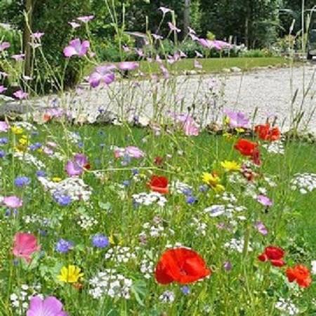 Chacun voit midi la porte de son jardin le jardin bien for Le jardin naturel lespinasse