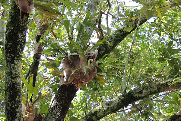 L'orchidée est une plante épiphyte