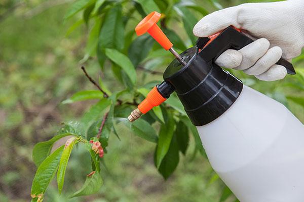 Le fongicide tue les champignons responsables des maladies