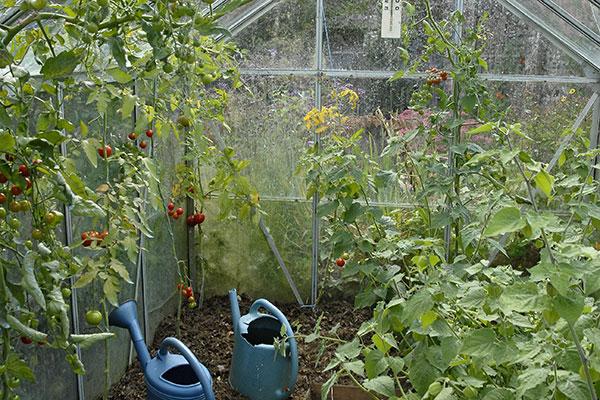 utiliser des tunnels pour forcer les plantes