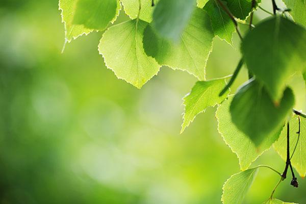 Les élèments nutritifs sont la nourriture des plantes