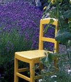 Délimitez votre jardin avec cette vivace