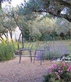 Lavande et olivier pour un décor méditerranéen