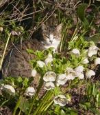 Le chat vous indique souvent les meilleurs coins ensoleillés