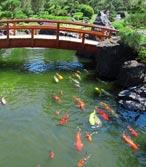 Lavabo bache pour bassin pour poisson for Carpe koi truffaut