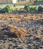 Le fumier enrichit le sol en matières organiques.