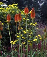 Composer un jardin exotique dossiers for Plante exotique exterieur