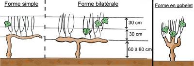 Autres formes de palissage de la vigne