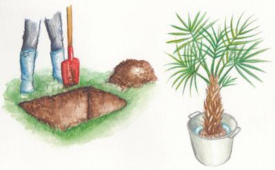 Formez le trou de plantation pendant que la motte s'imbibe d'eau