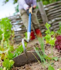 Binez régulièrement votre terre pour qu'elle absorbe mieux l'eau