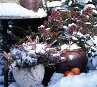 Protégez le contenant du froid, c'est protéger les racines de la plante qu'il contient !