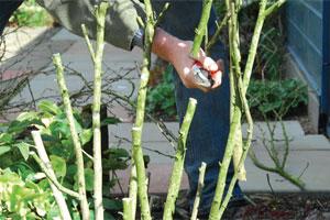 Laisser les branches intérieures un peu plus longues - Crédit photo Colour your life