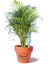 choisir son syst me d arrosage de vacances pour ses plantes d int rieur gamm vert. Black Bedroom Furniture Sets. Home Design Ideas