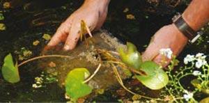 Immergez doucement le panier dans l'eau - Crédit photo Colour your life