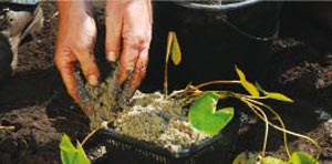 Remplir le panier avec un terreau spécifique et recouvrir d'une couche de sable grossier pour que la terre ne s'en aille pas - Crédit photo Colour your life