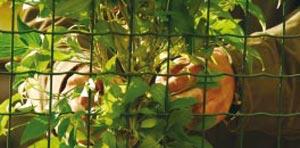 Offrez-lui un support pour aider ses branches volubiles à grimper - Crédit photo Colour your life