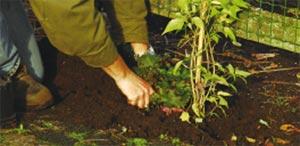 protégez du soleil la base  avec une petite plante basse - Crédit photo Colour your life