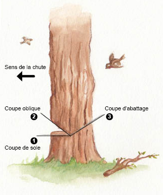 Tron onnage du bois abattage d bitage branchage - Comment couper des parties d une video ...