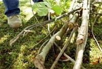Branches et déchets de taille à broyer - Photo Bosch