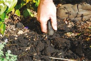 Creusez le trou de plantation