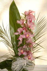 Une orchidée pour décorer la table des fêtes