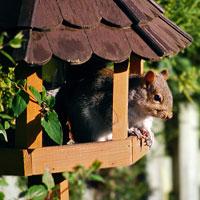 Protégez les mangeoires des écureuils acrobates !