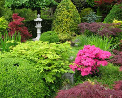 Scène de jardin à l'esprit japonais avec des érables du Japon