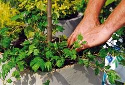 A la base d'un petit arbre, il y a de la place pour quelques plantes décoratives !