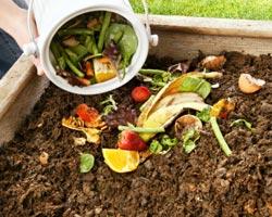 Un bon compost enrichit votre sol