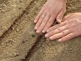 Recouvrez les semis de terre