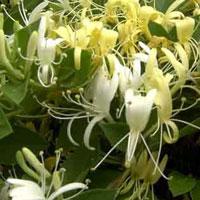 Les Fleurs Comestibles Gamm Vert