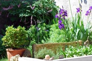 Les Iris dans vos jardins