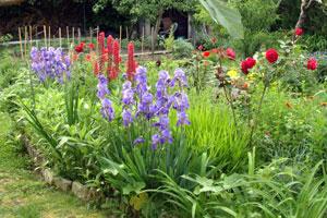 composez un beau jardin d 39 iris gamm vert. Black Bedroom Furniture Sets. Home Design Ideas