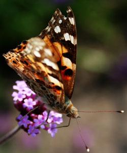 Attirez les insectes pollinisateurs dans votre jardin naturaliste