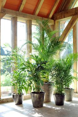 Palmier cadeau des dieux le magazine gamm vert - Petit arbre pour balcon ...