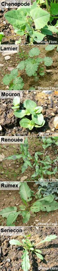Pensez aux prairies fleuries comme remèdes aux mauvaises herbes