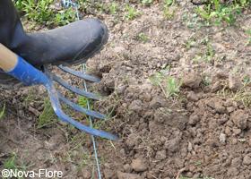 Nettoyez la parcelle des mauvaises herbes